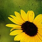 Sunflower in Abstract by Irene Walters