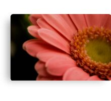 In the pink   (Geum macro) Canvas Print