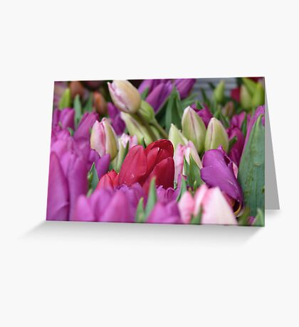 Multi-colored Tulips Greeting Card