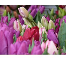 Multi-colored Tulips Photographic Print