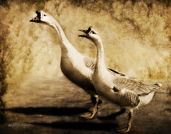 Gabbing Geese Go Walking (Art & Poetry) by Rhonda Strickland
