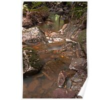 Holwell Gorge Poster