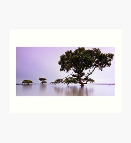 Tranquil Dawn - Cleveland Point Qld Art Print