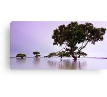 Tranquil Dawn - Cleveland Point Qld Canvas Print