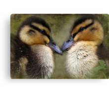 """""""The Look of Love ..."""" Canvas Print"""