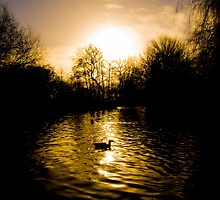 Martin Mere - Silhouette in the Evening by Nick Leech