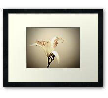 Joseph's Lily Framed Print