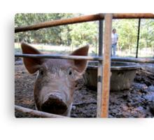 Happy Pigs Canvas Print