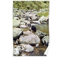 Young Indy in the Aber River Poster