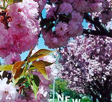 May in New Jersey by DawnToDuskColor