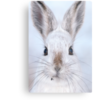 A Mad Hare Day / Snowshoe Hare Metal Print