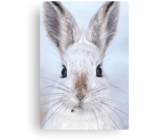 A Mad Hare Day / Snowshoe Hare Canvas Print