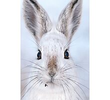 A Mad Hare Day / Snowshoe Hare Photographic Print