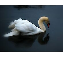 Swan on a Foggy Pond Photographic Print