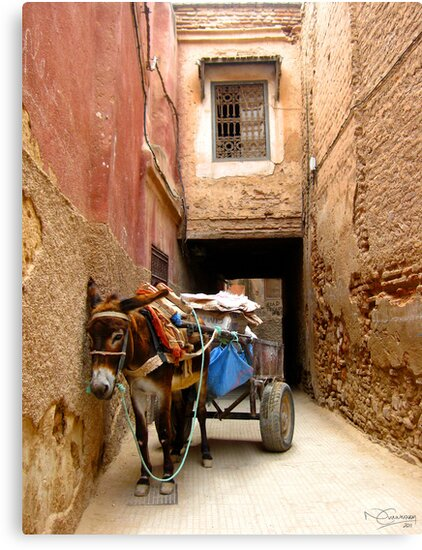 Little Donkey, Morocco by NCunningham
