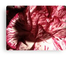 Carnation Macro Canvas Print