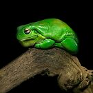 Froggy by Shannon Rogers