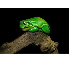 Froggy Photographic Print