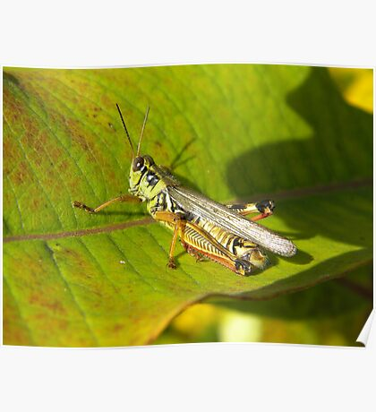 Armour Plated Hopper Poster