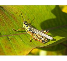 Armour Plated Hopper Photographic Print
