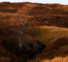 Lone tree in Glen Lyon by Cliff Williams