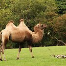 Got the hump hump by Ray Clarke