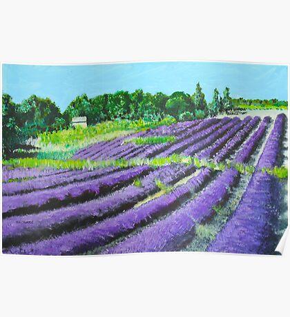 Lavender Provence Poster