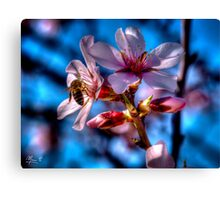 Almond tree in bloom Canvas Print