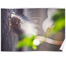 Caterpillar bokeh Poster