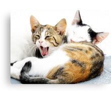 Santorini Kittens Canvas Print