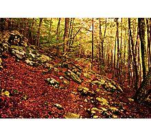 Wilderness Photographic Print