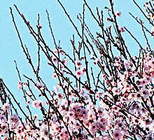 Spring In Bloom - Pink Cherry Blossoms by Monique Barber