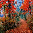 Along the Path of Autumns Forest Flames by Lee Hiller