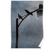 Tweet Tweet - St. Simons Island, GA Poster