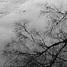 sunday rain by Desiree Salas
