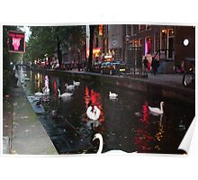 Red Light Swans Poster
