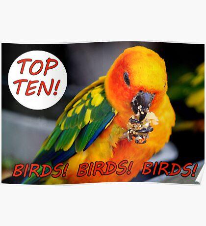 TOP TEN BANNER Birds! Birds! Birds! Poster