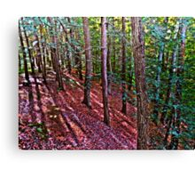 Through the Pine Tree Forest Canvas Print