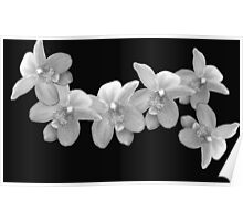Crystal Orchids Poster