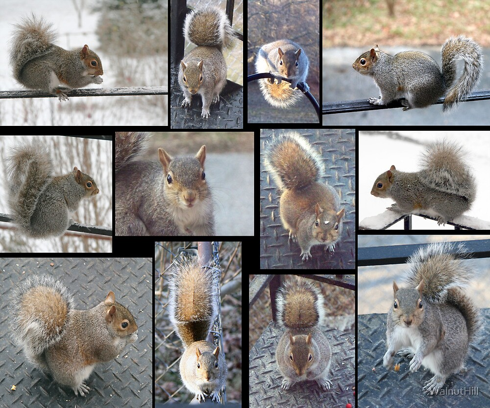 Squirrely Squirrels by WalnutHill