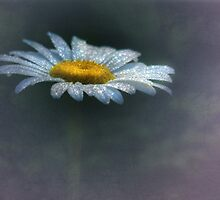 Daisy Daydreams by Lori Deiter