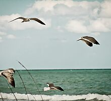 Freedom by Hector Chacon
