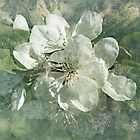 Apple Green by Vickie Emms