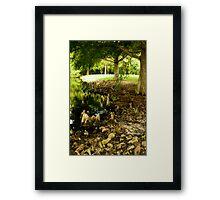 Sandalwood Neighborhood. Framed Print