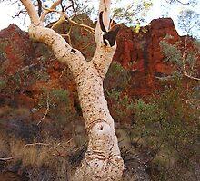 Tree in Australian Desert by akrolith