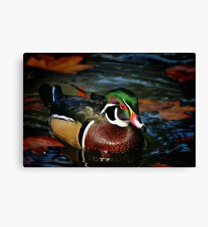 Colorful Swim Canvas Print