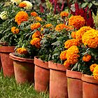 Victoria Memorial Potted Plants (Kolkata) by BGpix