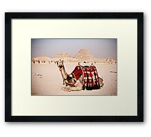 Tourist attraction - Camel at Giza pyramids, Cairo Framed Print