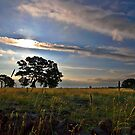 Evening Light by Joy Watson