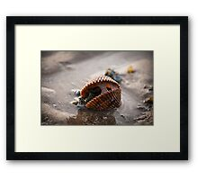New Life within - Shell at the beach Framed Print